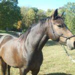 """Horsey McLargeHorseFace"""